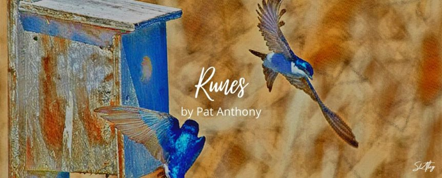 Runes by Pat Anthony