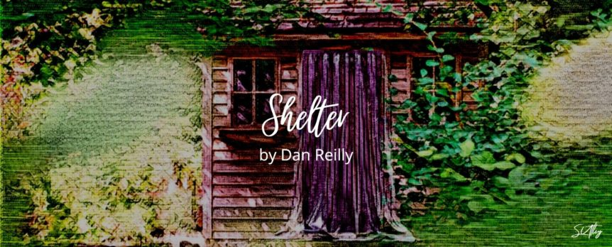 Shelter by Dan Reilly